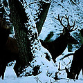 Winter Harmony  by Colette V Hera  Guggenheim