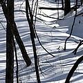 Winter Hillside by Fred Sheridan