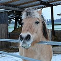 Winter Horse by FL collection