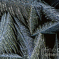 Winter In Canada- Winter Frost by Inspired Nature Photography Fine Art Photography