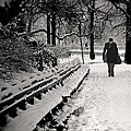 Winter In Central Park by Madeline Ellis