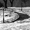 Winter In Central Park by Zina Zinchik