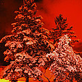 Winter In Minneapolis by Archana N