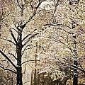 Winter In St. Louis by Marty Koch