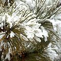 Winter In The Heartland 10 by Deborah Smolinske