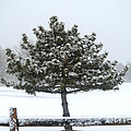 Winter In The Heartland 11 by Deborah Smolinske