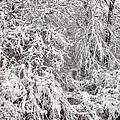 Winter In The Heartland 12 by Deborah Smolinske