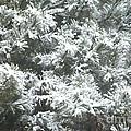 Winter In The Heartland 2 by Deborah Smolinske