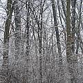 Winter In The Heartland 8 by Deborah Smolinske