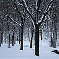 Winter In The Park by Dora Sofia Caputo Photographic Design and Fine Art