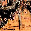 Winter In The Vineyard by Beth Sanders