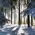 Winter Landscape by Aged Pixel