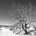 Winter Landscape by Alexey Stiop