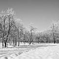 Winter Landscape In Bw by Dan Radi