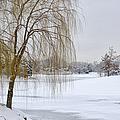 Winter Landscape by Julie Palencia
