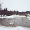 Winter Landscape With Trees And Frozen Pond by Matthias Hauser