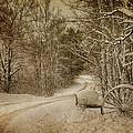 Winter Lane by Paul Freidlund