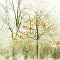 Winter Leaves by Julie Palencia