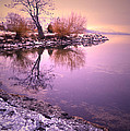 Winter Light Reflected by Tara Turner
