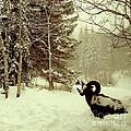 Winter Lost by Maurisca Sardju