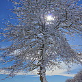 Winter Magic by Amazing Jules