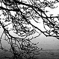 Winter Magnolia by Valoree Skiles