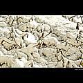 Winter Marigolds by Larry Jost