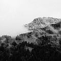 Winter Mist by Olivier De Rycke