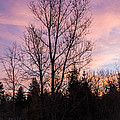 Winter Morning Sky by Cheryl Baxter