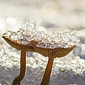 Winter Mushrooms by Mircea Costina Photography