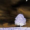 Winter Night by Tara Potts