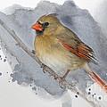 Winter Northern Cardinal by Betty LaRue
