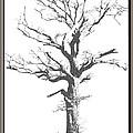 Winter Oak Art by Debbie Portwood