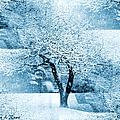 Winter Orchard by Shana Rowe Jackson