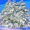 Winter Painting by Irfan Gillani