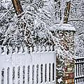 Winter Park Fence by Elena Elisseeva