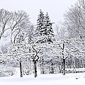 Winter Park Landscape by Elena Elisseeva