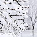 Winter Park Under Heavy Snow by Elena Elisseeva