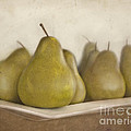 Winter Pears by Cindy Garber Iverson