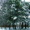 Winter Pine Tree  by Jeelan Clark