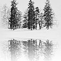Winter Pines by Bill Cannon