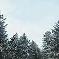 Winter Pines by Margie Hurwich