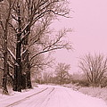 Winter Pink by Carol Groenen