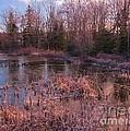 Winter Pond Landscape by John Malone