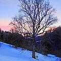 Winter Poplar Tree by Duane McCullough