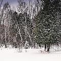 Winter Postcard by Gwen Gibson