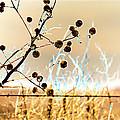 Winter Prairie by Sylvia Thornton