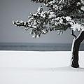 Winter Quiet by Karol Livote