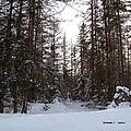 Winter Quiet by William Tasker
