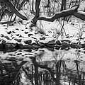 Winter Reflection by Claudio Bacinello